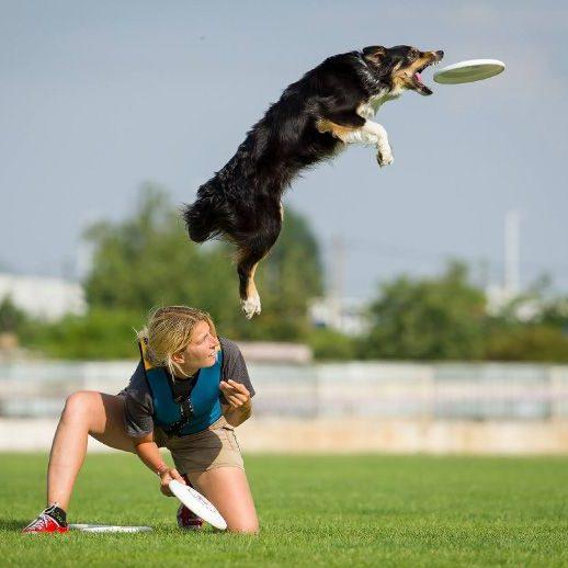 dogfrisbee-beseda